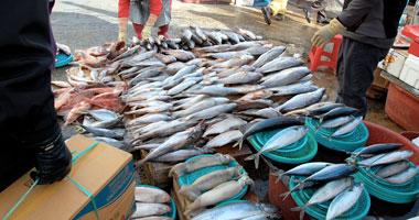 300 تاجر سمك يقررون النزول 30 يونيه لتحسين أوضاعهم
