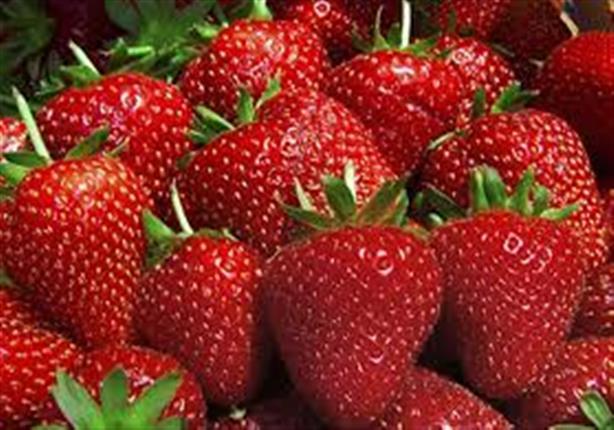 صورة الزراعة: لم نتلق أي شكوى من الفراولة المصرية في الأسواق الأمريكية