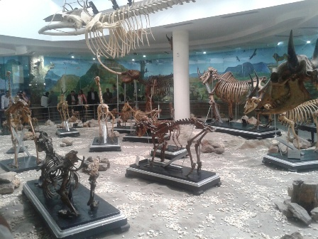 .. شاهد حيوانات منقرضة وحفريات نادرة فى متحف حديقة الحيوان بالجيزة
