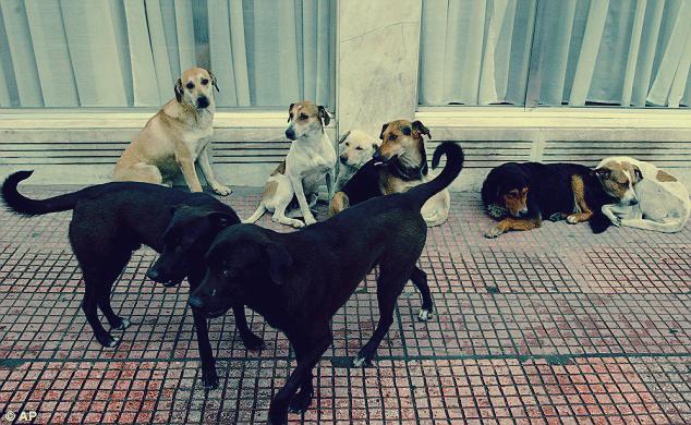 صورة كلاب ضالة تأكل هندية أمام أعين ابنها: هاجمها أكثر من 100 على الشاطيء