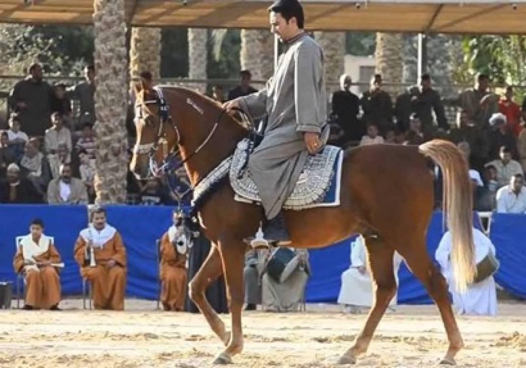 صورة الشرقية تتزين إستعداداً لمهرجان الخيول العربية بقرية الفروسية ببلبيس