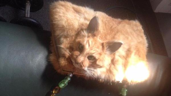 صورة بالصور.. 1400 دولار ثمن حقيبة يد مصنوعة من قط ميّت