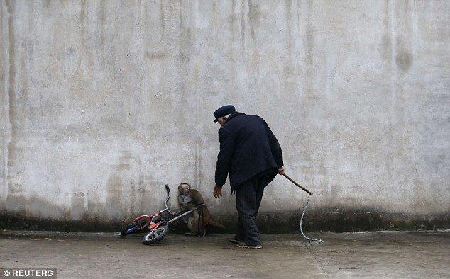 صورة بالصور.. تعرف على معاناة حيوانات السيرك من أجل إسعاد الجماهير