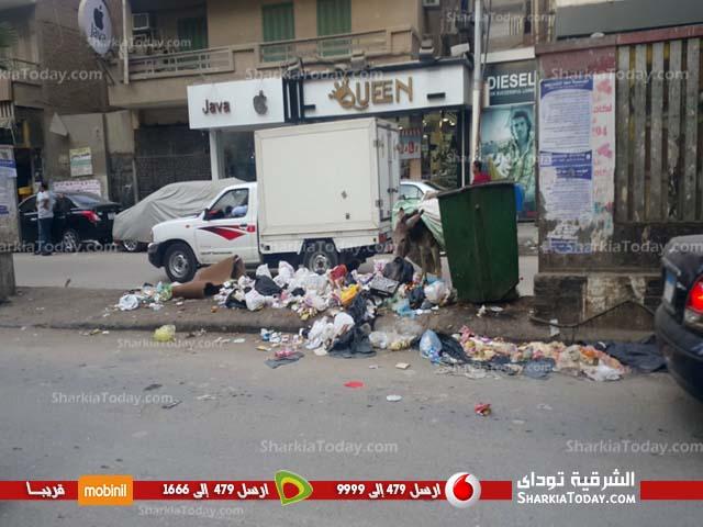 صورة بالصور.. ظاهرة انتشار الحيوانات الضالة وسط القمامة بالقومية