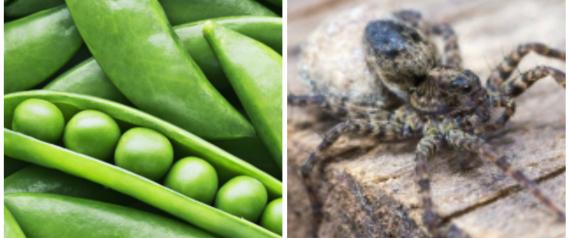 صورة تعرف على 5 حالات لكائنات ونباتات وجدت حية داخل جسم الإنسان