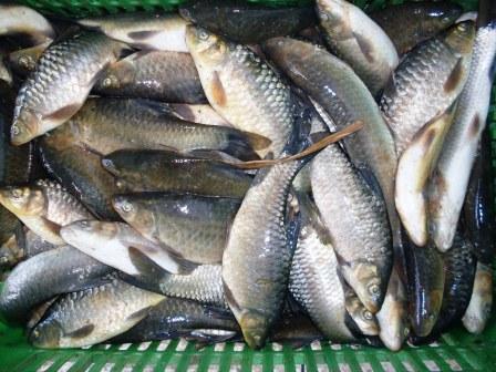 5 أنواع من الأسماك لا ينصح الأطباء بتناولها.. أهمها البلطى