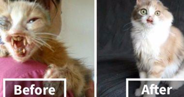 صورة عمليات تجميل أستطاعت تغيير مصير «قطة بائسة»