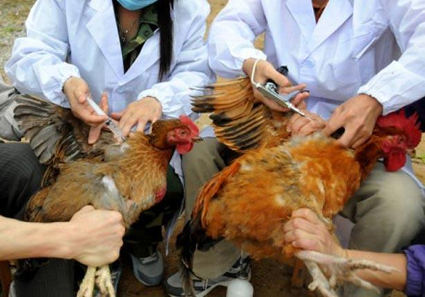 صورة حملة للتقصي الوبائي النشط لمرض أنفلونزا الطيور بالشرقية