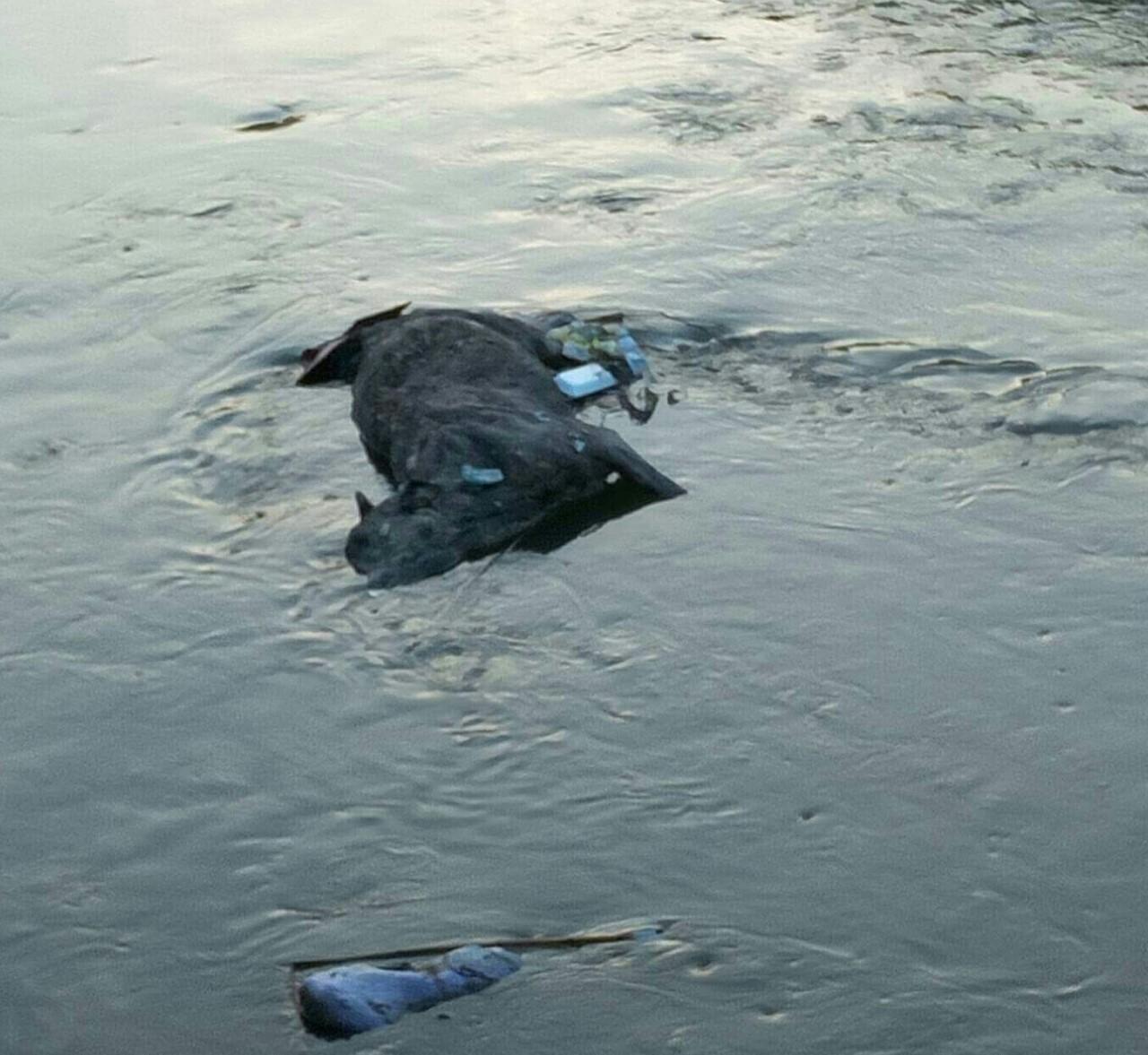 صورة غضب أهالي فاقوس بسبب حيوان نافق ملقى بالبحر