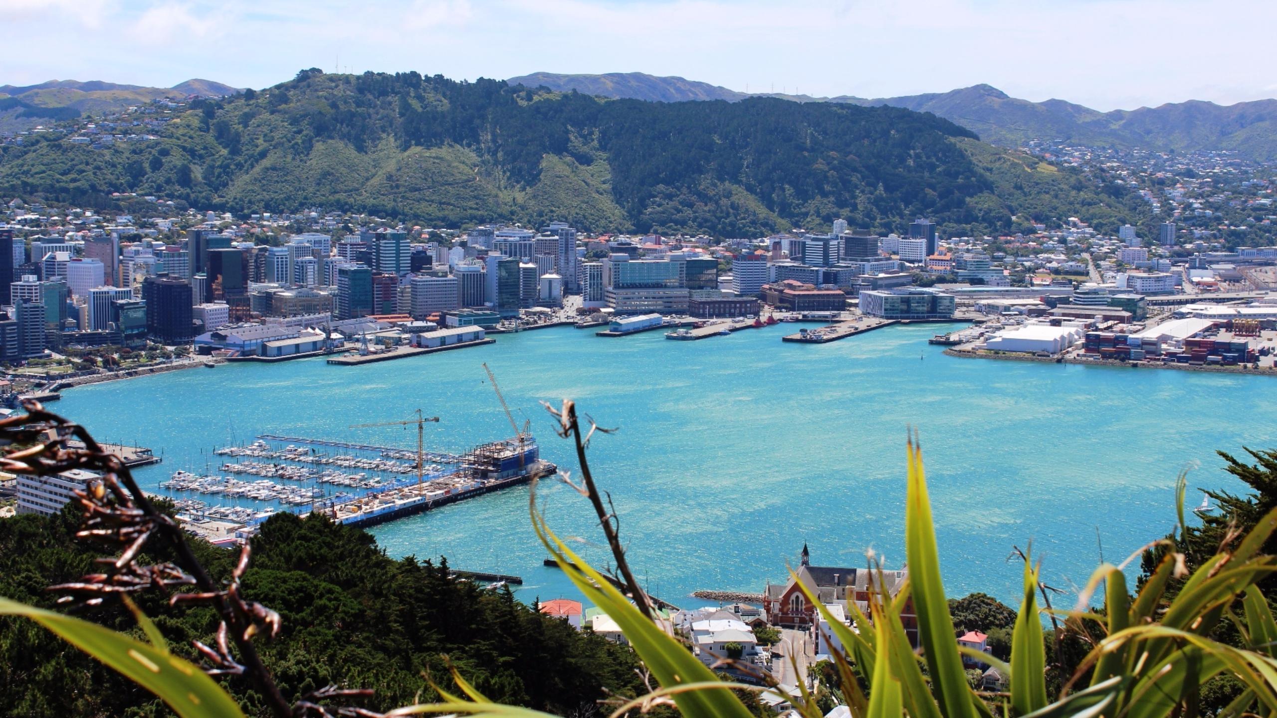 صورة صدق أو لا تصدق .. نيوزيلندا ستدفع نفقات سفرك السياحي إذا وافقت علي مقابلة عمل