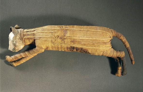 صورة المسح الضوئي يكشف شيئًا غريبًا على قطة المومياء المصرية.. تعرف عليه