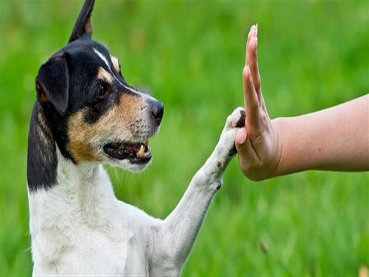 سبب نبح الكلاب