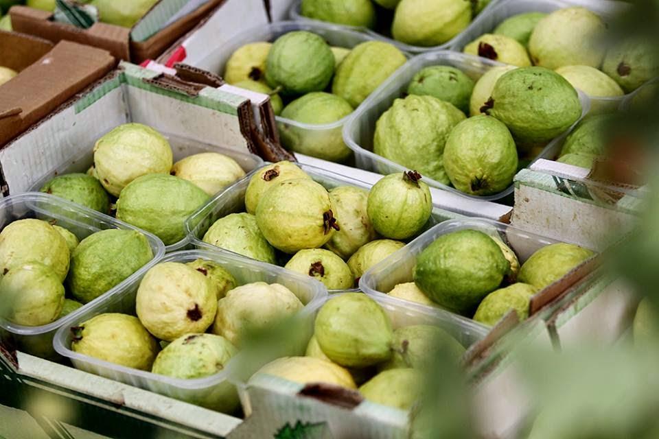 صورة وزارة الزراعة تعلق على حظر السعودية استيراد الجوافة
