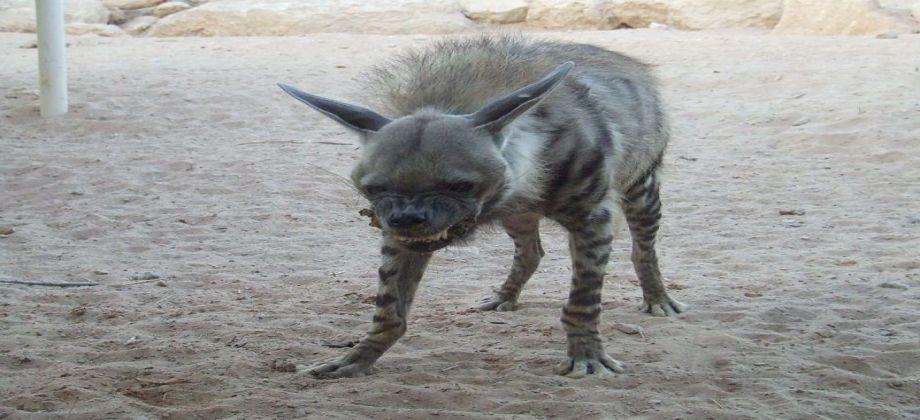 صورة حيوان غريب يثير الذعر في قرية بالصعيد ويصيب 15 مواطن