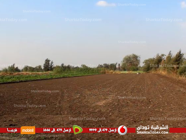 صورة حظر زراعة الأرز بمحافظة الشرقية تهدد حياة الفلاحين.. هنسيب الأرض تبور
