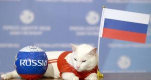 القط «أخيل» يتوقع فوز روسيا على السعودية
