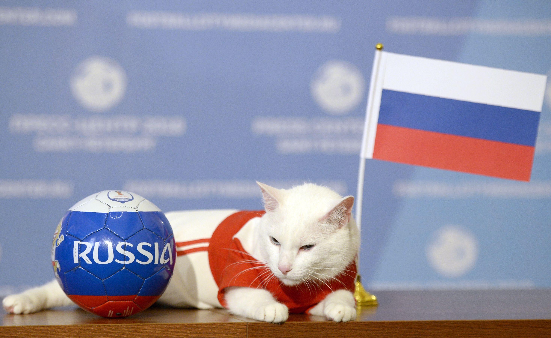صورة القط «أخيل» يتوقع فوز روسيا على السعودية فى افتتاح كأس العالم
