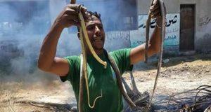 الزراعة تعلن أسباب انتشار الثعابين