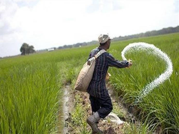 صورة الزراعة تعلن توفير الأسمدة الشتوية المدعمة لـ3.5 مليون فدان قمح