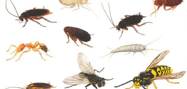 صورة النمل والذباب والصراصير .. وصفات طبيعية سحرية للتخلص من حشرات الصيف