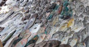 حقيقة السمك البلاستيك في الأسواق المصرية