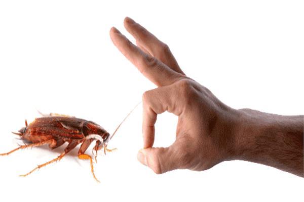 صورة 3 طرق فعالة للتخلص من «صراصير المطبخ»
