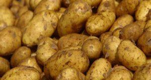 الزراعة تكشف سبب ارتفاع أسعار البطاطس