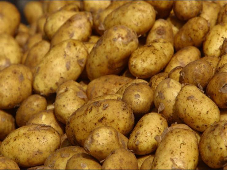 صورة الزراعة تكشف سبب ارتفاع أسعار البطاطس