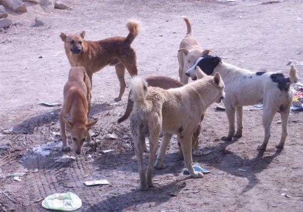 الزراعة تكشف حقيقة تصدير القطط والكلام خارج مصر