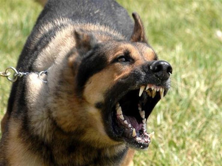 صورة مدرب يشرح كيفية تجنب هجوم الكلب
