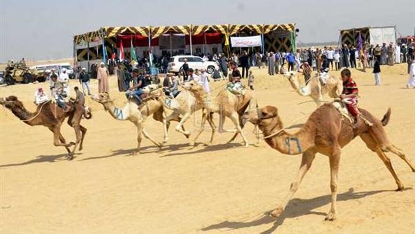 صورة محافظ الشرقية يعلن موعد انطلاق مهرجان الهجن العربية