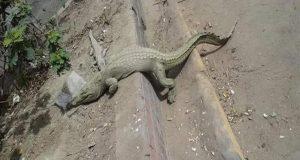 الحكومة توضح حقيقة هروب تمساح من حديقة الحيوان بالجيزة