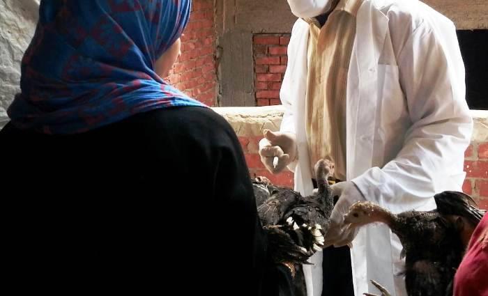 صورة تحصين 437 ألف طائر ضد انفلونزا الطيور بالشرقية
