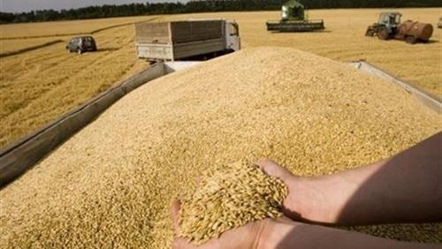 صورة محافظ الشرقية: انتظام توريد القمح لصوامع المحافظة
