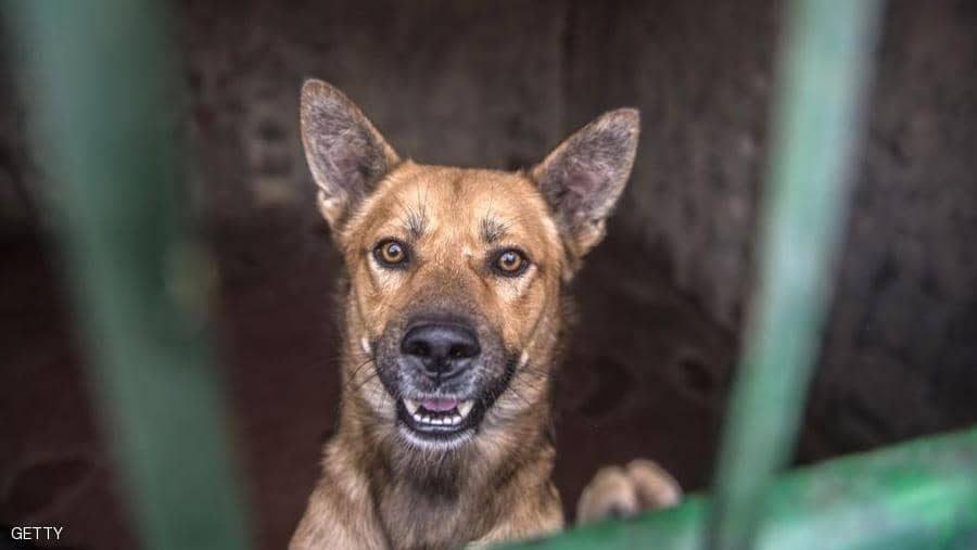 صورة أمريكا تمنع استيراد الكلاب من مصر