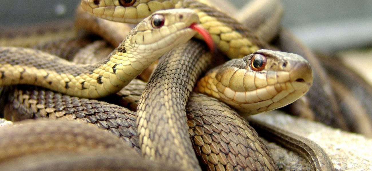 صورة احذر هذا الخطأ يعرض منزلك لغزو الثعابين