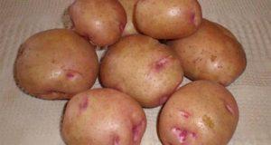 أضرار البطاطس