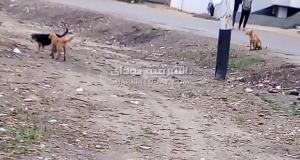 الكلاب الضالة في قرى أبوحماد