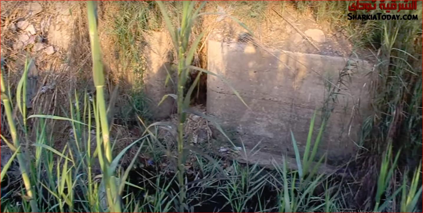 صورة صرخة فلاحين القنايات بسبب مياه الري ونداء عاجل لمحافظ الشرقية