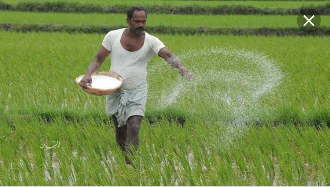 صورة نقيب فلاحين الشرقية يكشف حقيقة ارتفاع أسعار الأرز