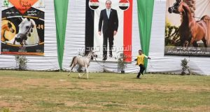 مهرجان الشرقية للخيول