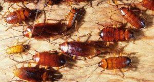 طرق للتخلص من الحشرات والقوارض