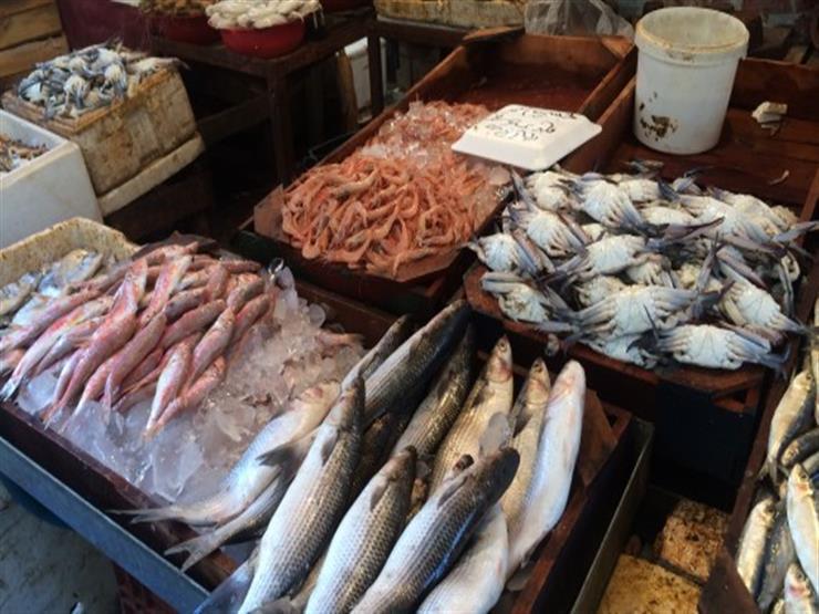 صورة أسعار السمك اليوم الأربعاء 20 نوفمبر في مصر