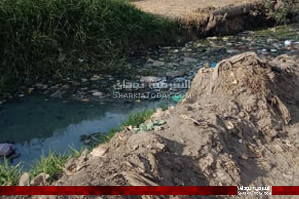 ترعة في أبوحماد تروي الأراضي بمياه الصرف الصحي والحيوانات النافقة