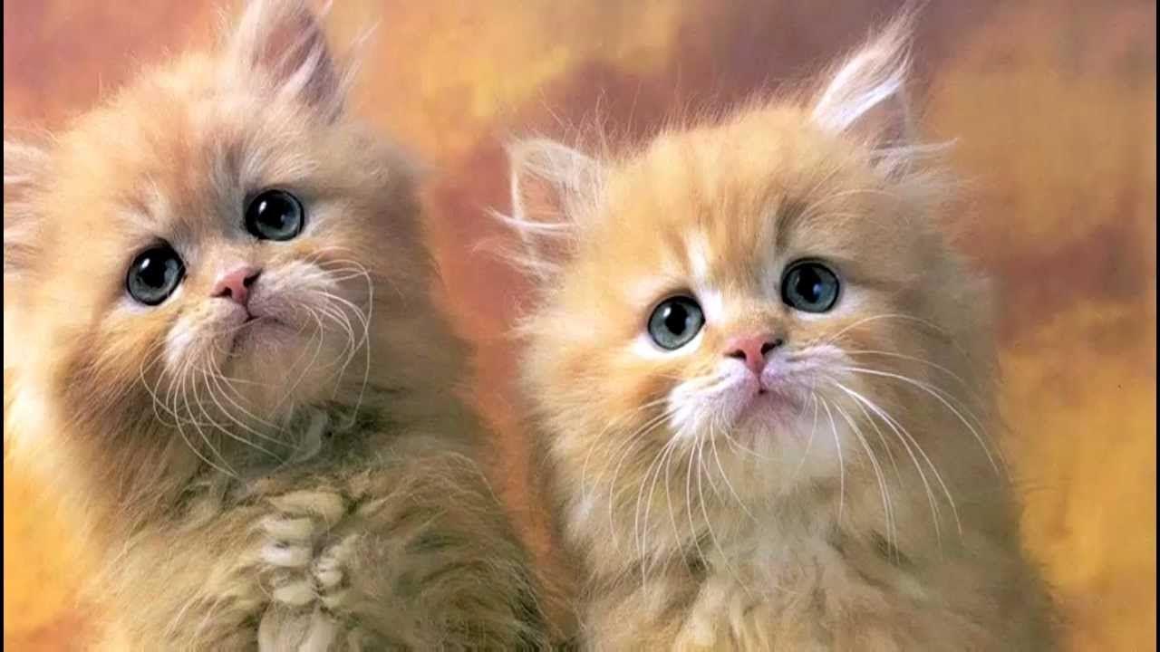 صورة تعرف على أهمية تواجد القطط في المنزل