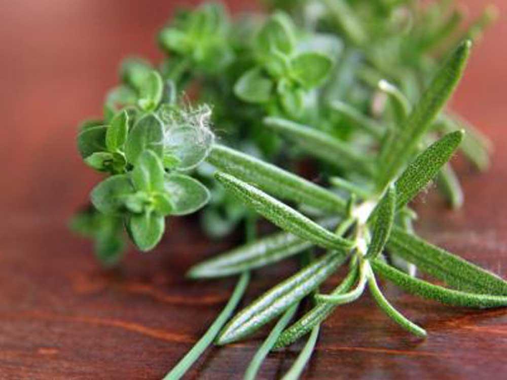 أعشاب تحتوي على هرمون الإستروجين تعرف عليها الشرقية توداي