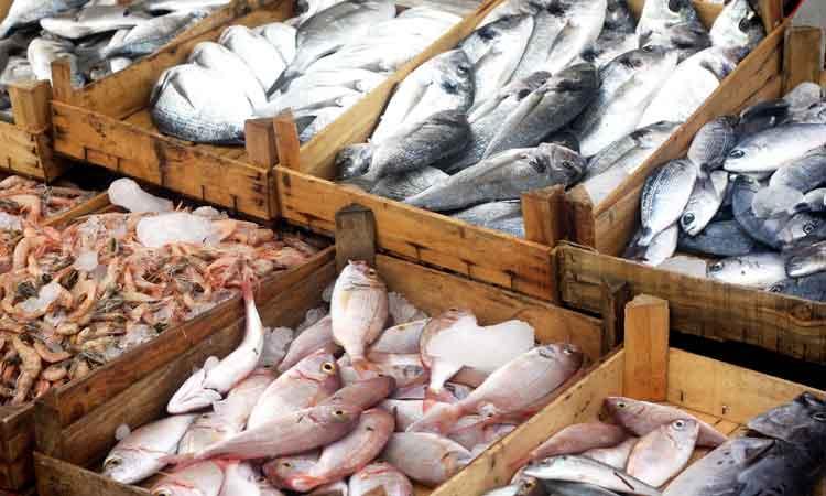 صورة تعرف على أسعار السمك اليوم الأحد 12 يناير 2020 في مصر