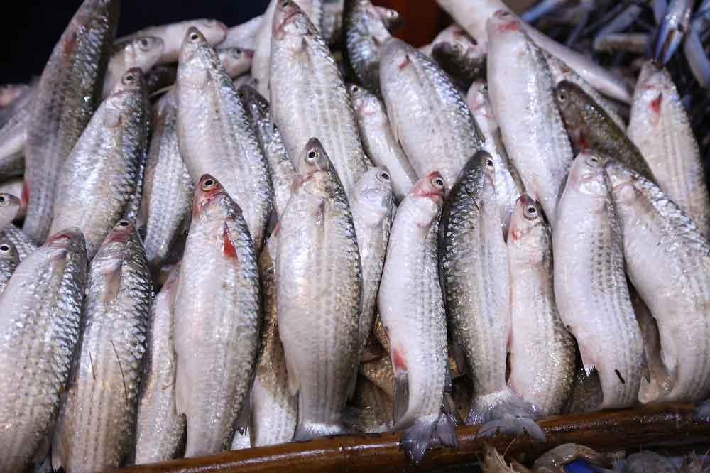 صورة البوري بـ 45 جنيه.. تعرف على أسعار السمك اليوم الثلاثاء 21 يناير 2020 في مصر