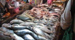 أسعار السمك اليوم