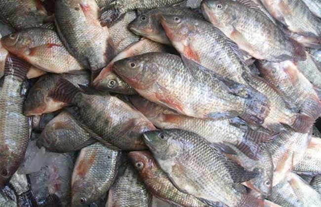 صورة تعرف على أسعار السمك اليوم الإثنين 20 يناير 2020 في مصر